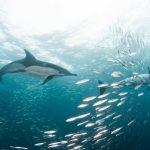 高校生、大学生のみなさまへ~ArcGIS StoryMaps で海を学び、発信しませんか~